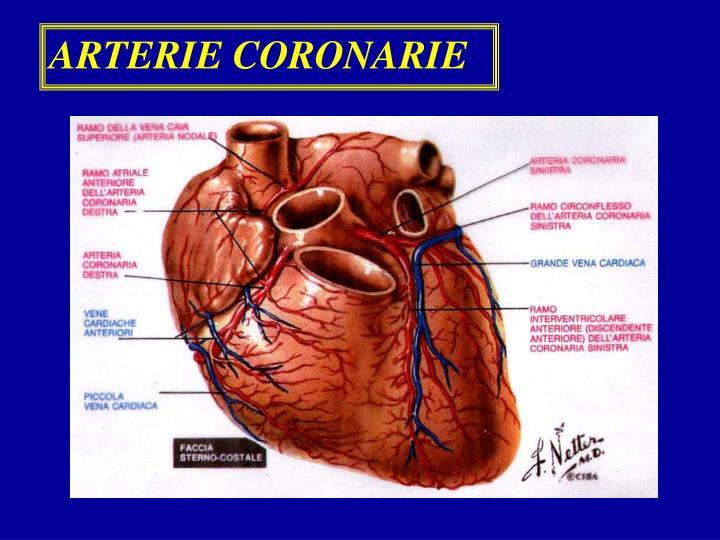 ARTERIE CORONARIE