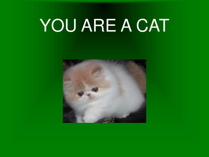 YOU ARE A CAT
