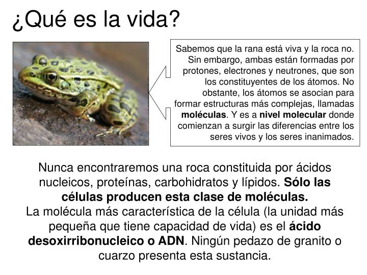 Sabemos que la rana está viva y la roca no. Sin embargo, ambas están formadas por protones, electr...