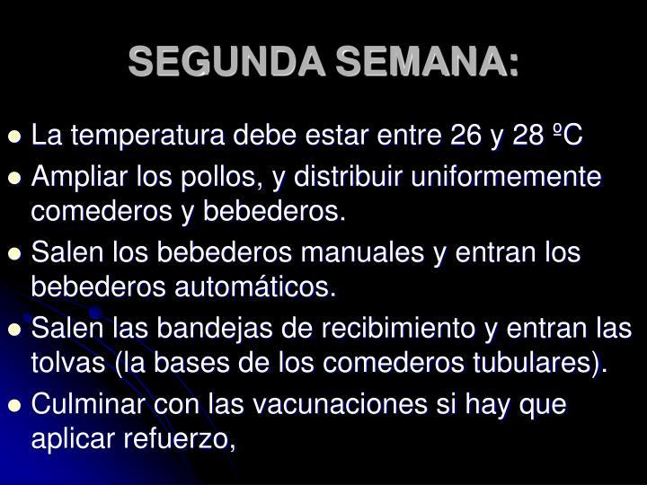 SEGUNDA SEMANA: