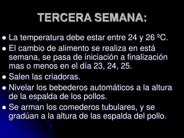 TERCERA SEMANA: