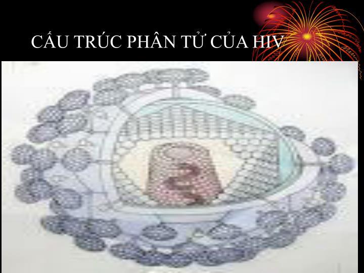 CẤU TRÚC PHÂN TỬ CỦA HIV