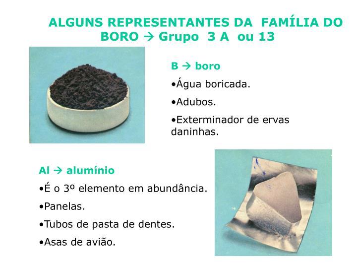 ALGUNS REPRESENTANTES DA  FAMÍLIA DO           BORO