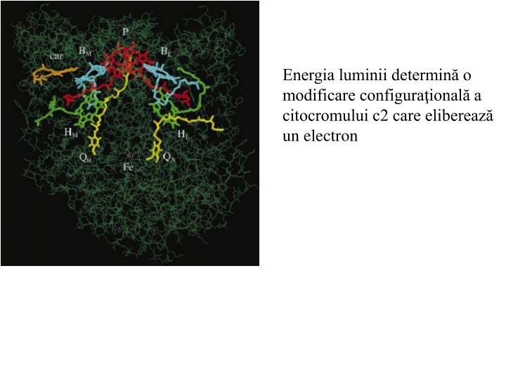 Energia luminii determină o modificare configuraţională a citocromului c2 care eliberează un electron