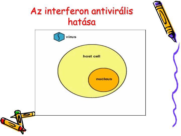 Az interferon antivirális hatása