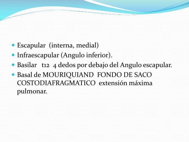 Escapular  (interna, medial)