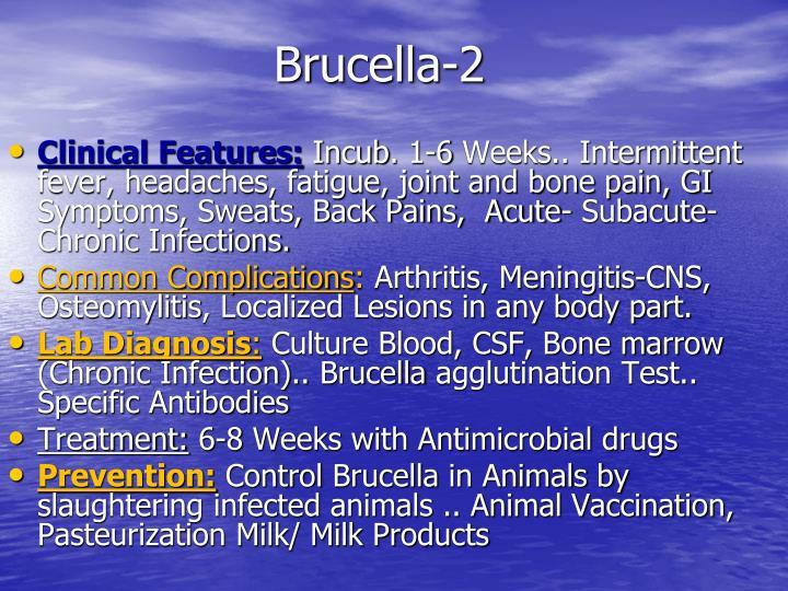 Brucella-2