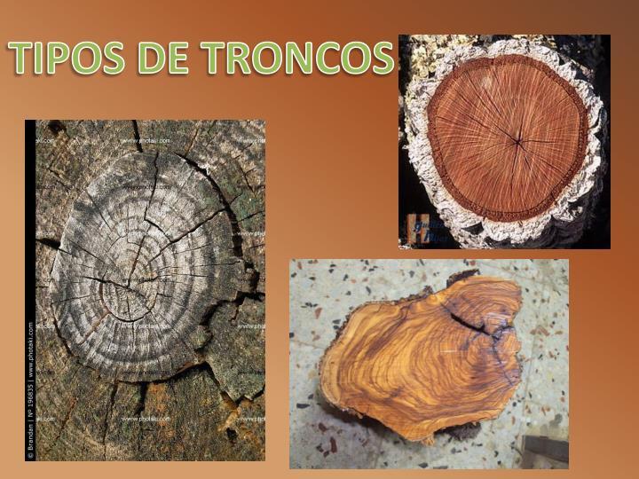 TIPOS DE TRONCOS