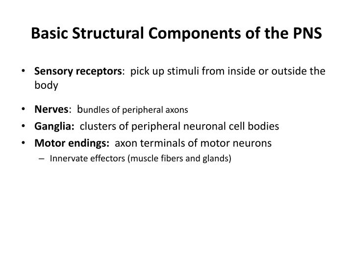 Basic Structural Components of the PNS
