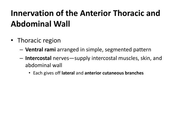 Innervation of the Anterior Thoracic and Abdominal Wall