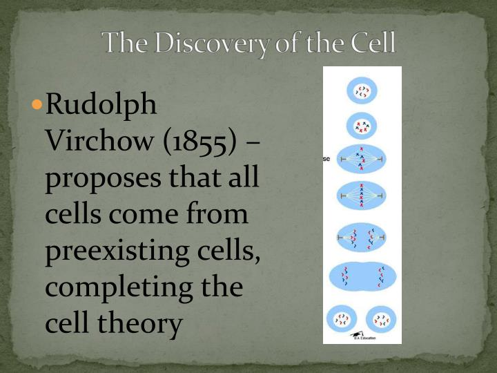 Rudolph Virchow (1855) – proposes that all cells come from preexisting cells, completing the cell theory