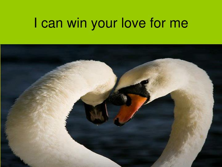 I can win your love for me