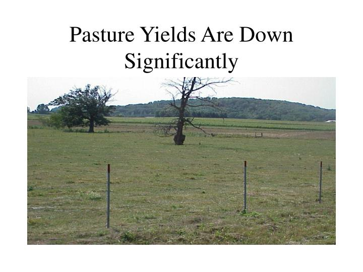 Pasture Yields Are Down Significantly