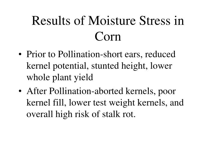 Results of Moisture Stress in Corn