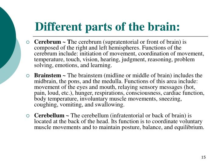 Different parts of the brain: