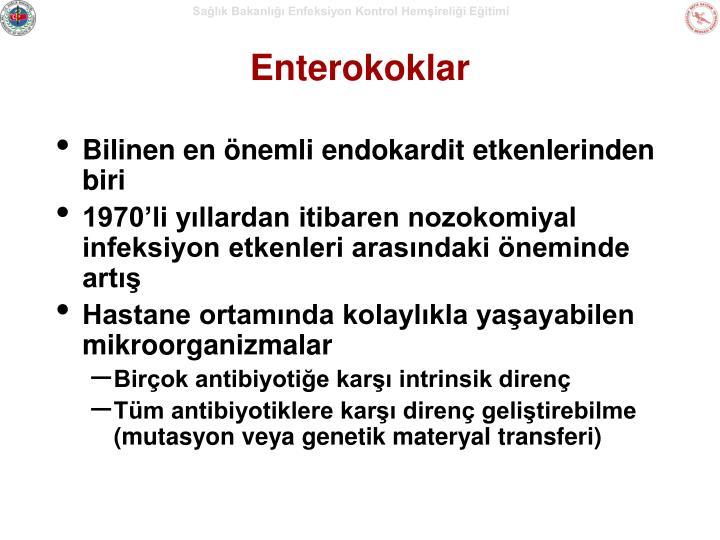 Enterokoklar