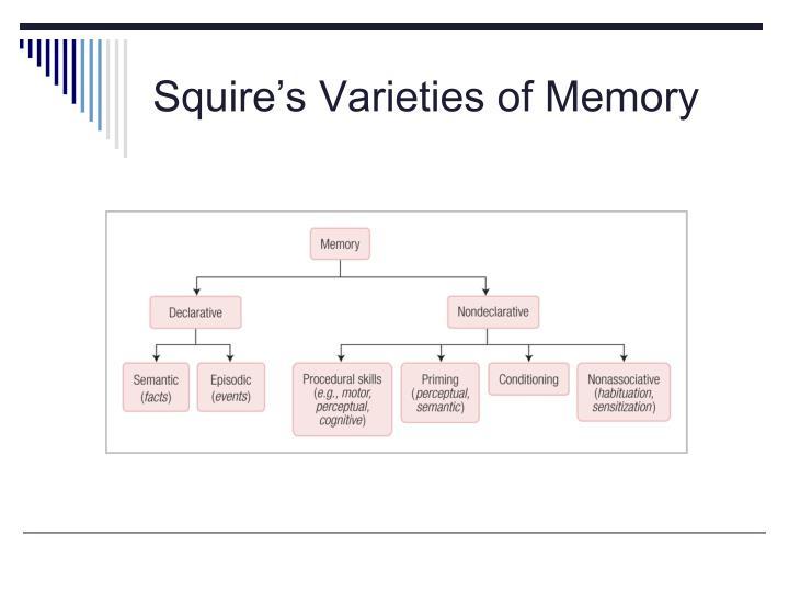 Squire's Varieties of Memory