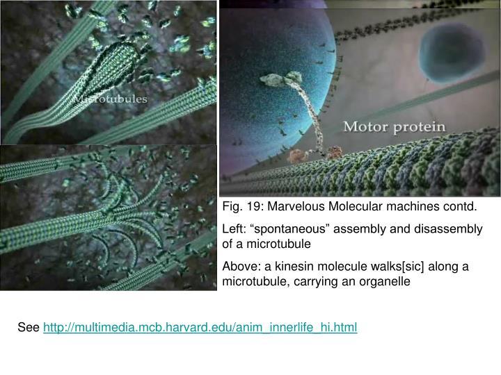 Fig. 19: Marvelous Molecular machines contd.