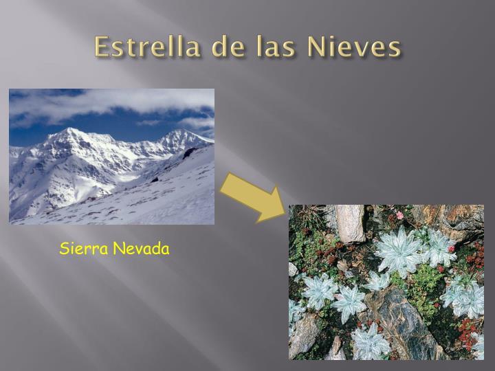 Estrella de las Nieves