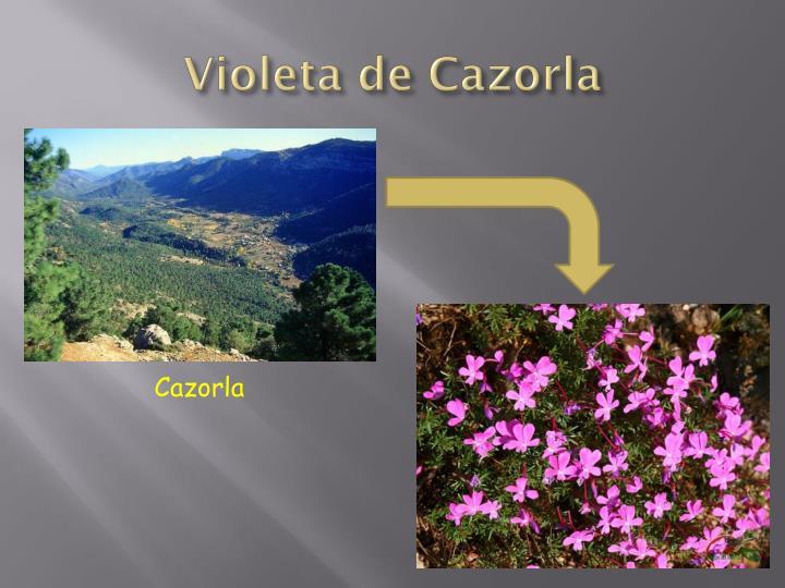 Violeta de Cazorla