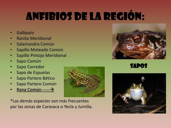 Anfibios de la Región: