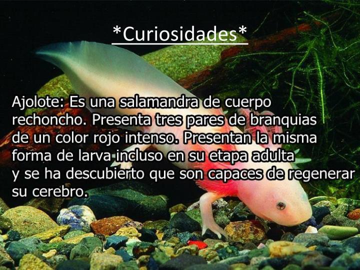 *Curiosidades*