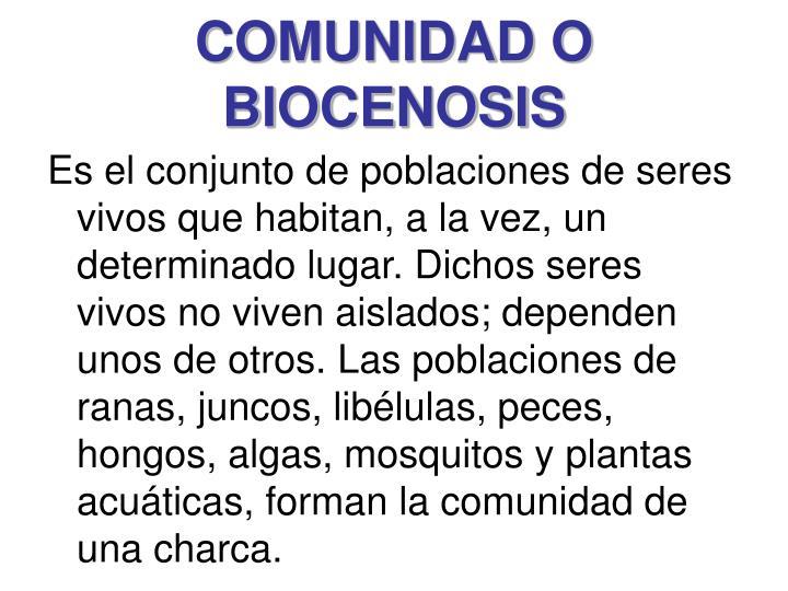 COMUNIDAD O BIOCENOSIS