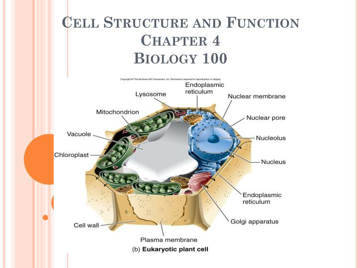 cell structure and function chapter 4 biology 100 n.