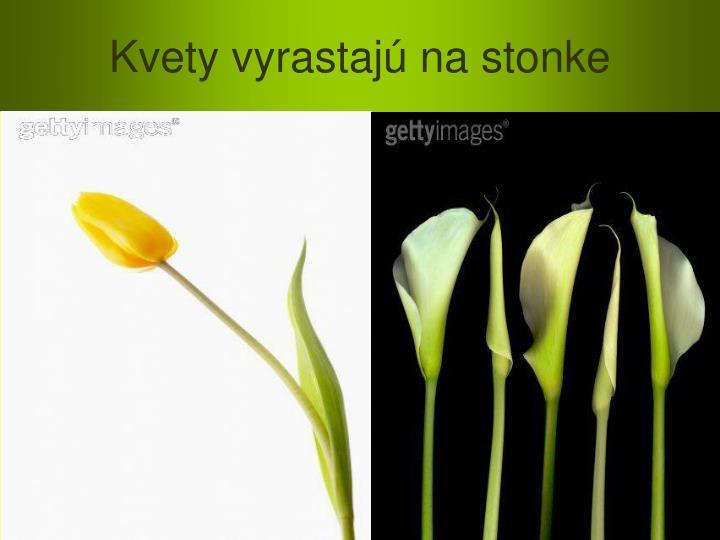 Kvety vyrastajú na stonke
