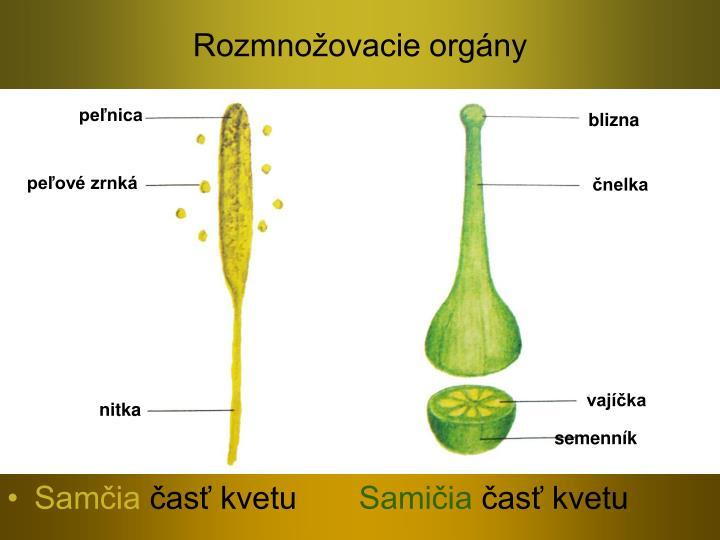 Rozmnožovacie orgány