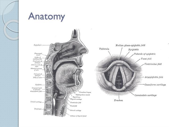 Modern Airway Anatomy Intubation Sketch - Anatomy And Physiology ...