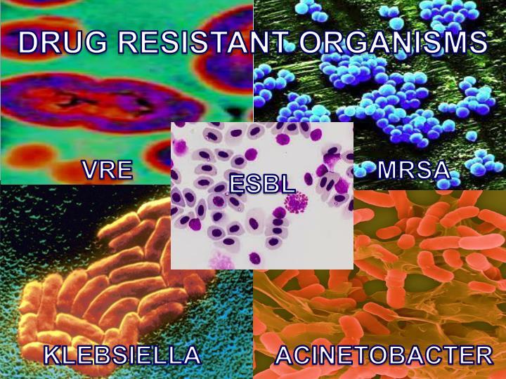DRUG RESISTANT ORGANISMS
