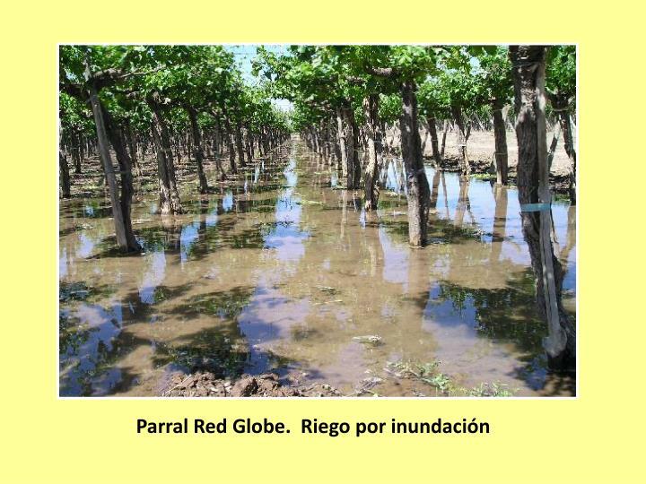 Parral Red Globe.  Riego por inundación