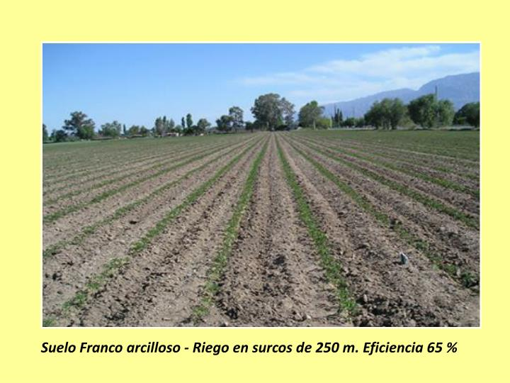 Suelo Franco arcilloso - Riego en surcos de 250 m. Eficiencia 65 %