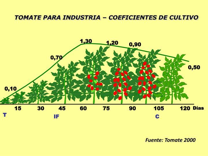 TOMATE PARA INDUSTRIA – COEFICIENTES DE CULTIVO