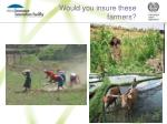 would you insure these farmers