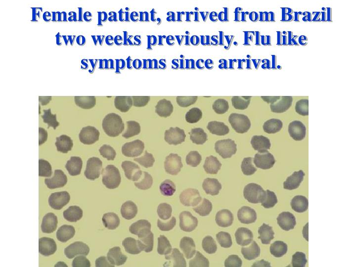 Female patient, arrived from Brazil two weeks previously. Flu like symptoms since arrival.