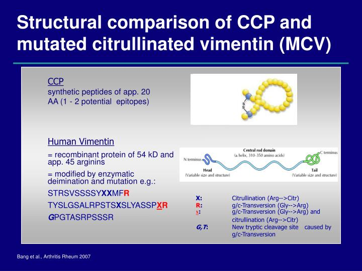 Structural comparison of CCP and mutated citrullinated vimentin (MCV)