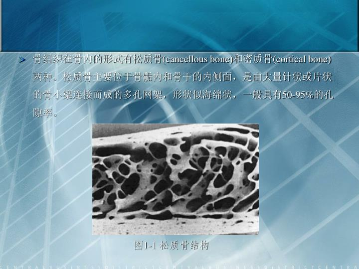 骨组织在骨内的形式有松质骨