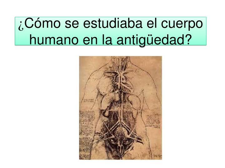PPT - Anatomía macroscópica PowerPoint Presentation - ID:2896298