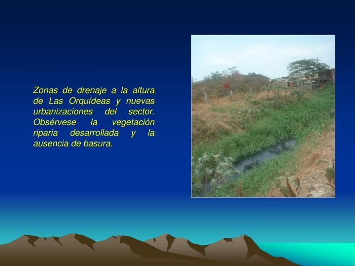Zonas de drenaje a la altura de Las Orquídeas y nuevas urbanizaciones del sector. Obsérvese la vegetación riparia desarrollada y la ausencia de basura.
