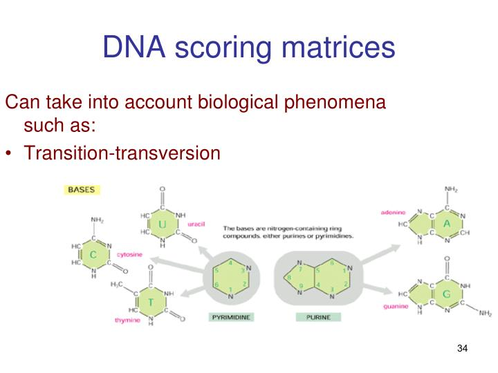 DNA scoring matrices