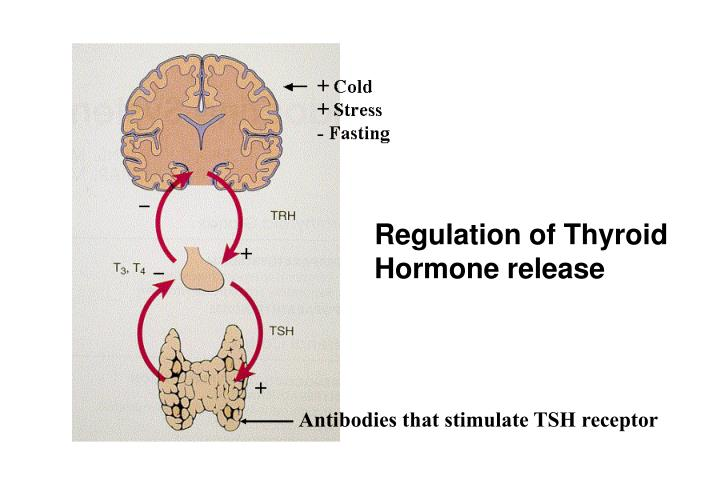 Regulation of Thyroid