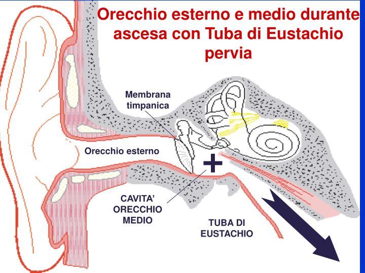 Orecchio esterno e medio durante