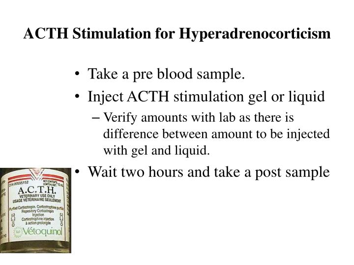 ACTH Stimulation for Hyperadrenocorticism