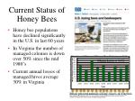 current status of honey bees