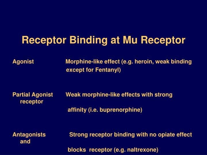 Receptor Binding at Mu Receptor