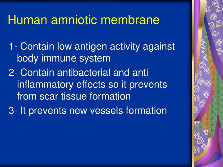 Human amniotic membrane
