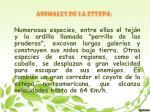 animales de la estepa
