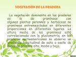 vegetaci n de la pradera